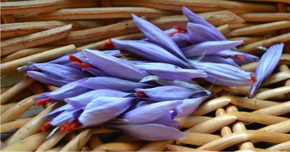 i fiori dello zafferano