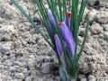 4 fiori