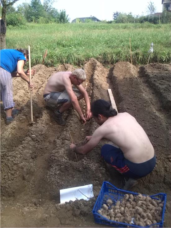 piantare i bulbi